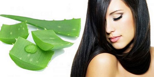 aloe vera can hair regrow
