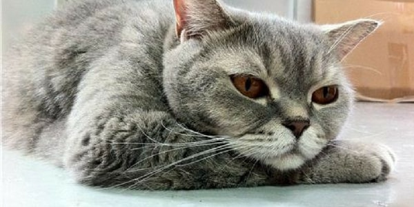 relaxed How to fix cats behavior problems