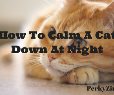 How To Calm A Cat Down At Night