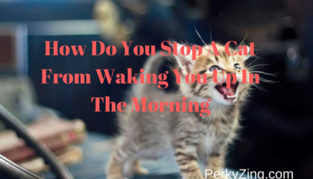 how to get my cat to stop meowing for food in the morning