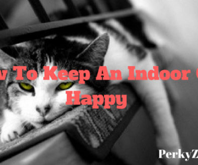 how to keep an indoor cat happy