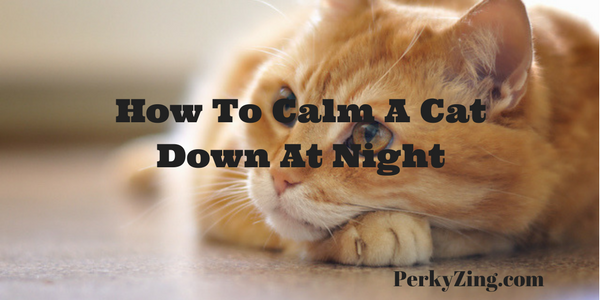 How To Calm A Cat Down At Night + When Angry+ When Scared