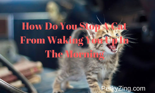 How Do You Stop A Cat From Waking You Up In The Morning