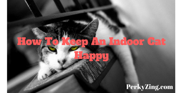 8 Simple Tips On How To Keep An Indoor Cat Happy